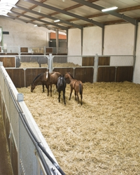 The loose stable for young horses in winter